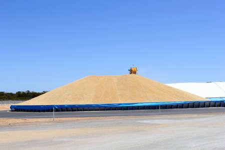 wheat grain: Machine processing wheat grain at a grain silo, Australia