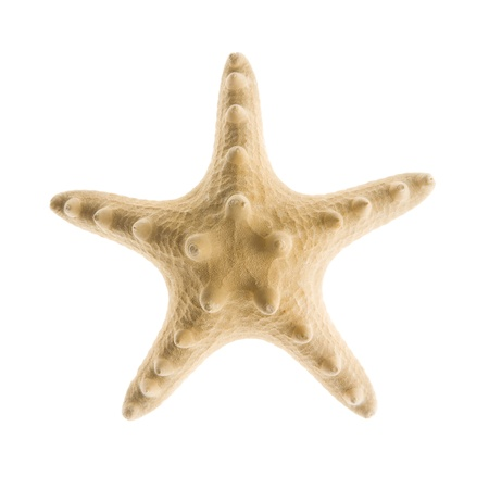 estrella de mar: Estrellas de mar aislado en blanco