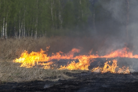 Fire and forest photo