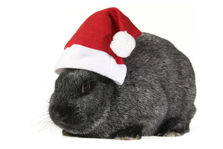 Bunny in the red santa claus hat