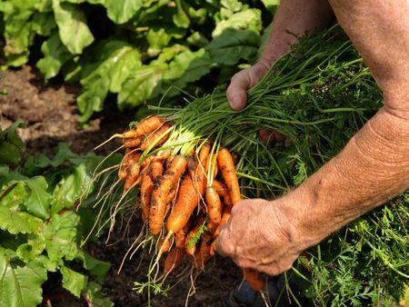 vitamines: vegetable gardening Stock Photo