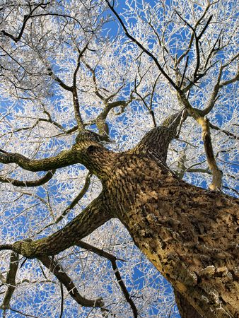 wintry: A magical wintry tree     Stock Photo