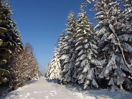 snow covered trees in the ardennes belgium Stock Photo - 4331992