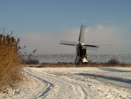 wind powered building: Winter time, flock of goose landing near a typical dutch mill in winter time
