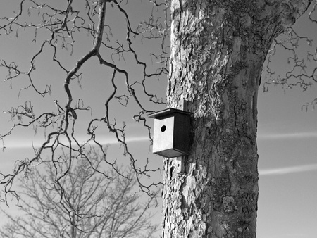 birdwatcher: Birdhouse on a tree in winter Black and White