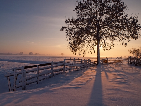 Pasture at winter sunset with tree and fence in front  photo