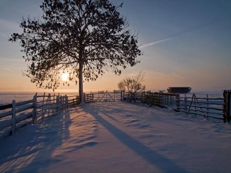 Winter landscape in pasture at sunset, Kinderdijk Netherlands  photo