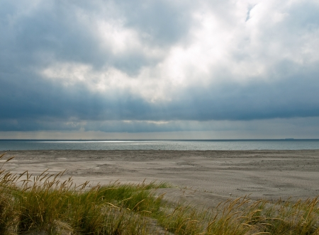 sea weed: Desolate beach