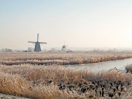 Winter landscape with windmills in Kinderdijk, Netherlands  photo