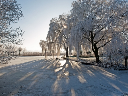 Winter landscape of a frozen pond and trees, Netherlands , Netherlands Stock Photo - 16616564