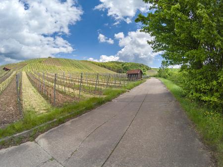 wine road: View on German vineyard in a rural landscape