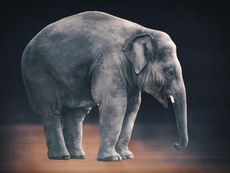 unmatched: Portrait of an lonely Elephant - unmatched in its beauty but kind of sad. Stock Photo