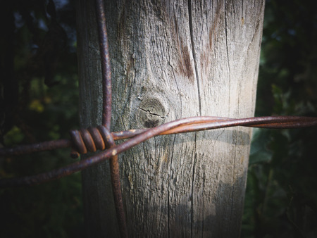 barbed wire fence: Wooden plank with rusty wire in front of it