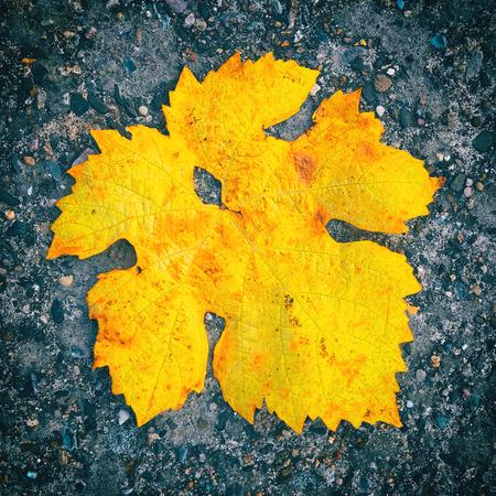 Lonley marple leaf of autumn lying on the ground