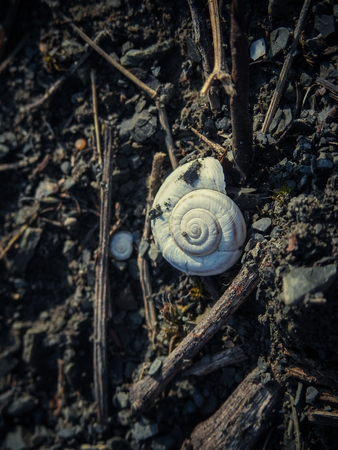 White empty snail shell on the ground