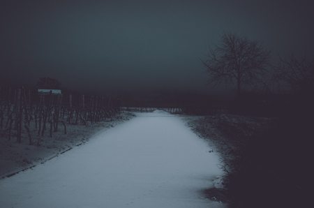 Winter in the vineyards by night