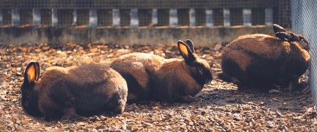 Group of brown rabbits behind a fence