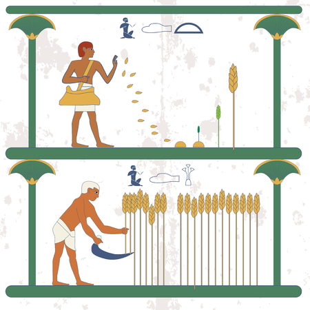 Ancient egypt background. Man sows wheat on the field. A man reaps a wheat crop on the field. Historical background. Ancient people