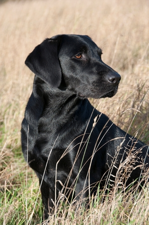 Close-up of a dog looking into the distance