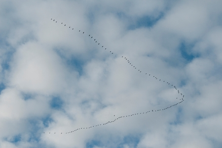 A flock of birds flying on a cloudy day
