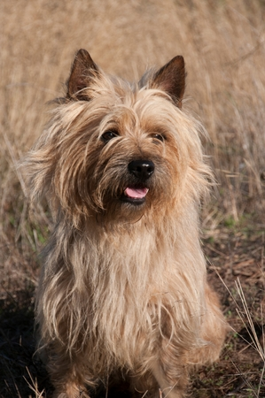 A dog in a field