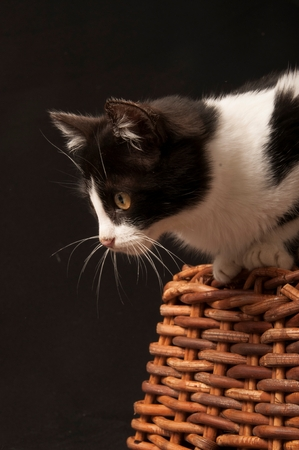 A cat on a basket Stock Photo
