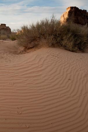 Sand dunes in a desert, Glen Canyon National Recreation Area, Glen Canyon Dam, Arizona-Utah, USA