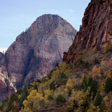 Trees on a mountain, Zion National Park, Utah, USA Stock Photo