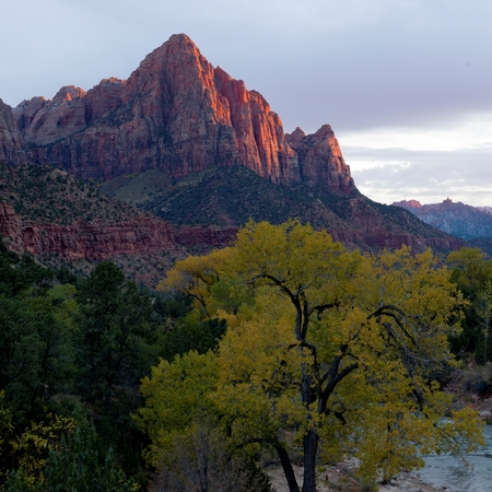 Trees in a forest with mountain range in the background, Zion National Park, Utah, USA