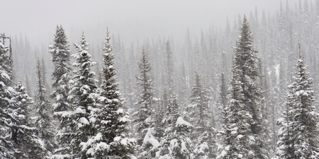 Snow covered trees, Symphony Amphitheatre, Whistler, British Columbia, Canada Stock Photo