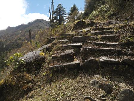 Forest, Bhutan Banco de Imagens