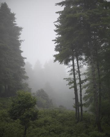 Trees in a forest, Punakha District, Bhutan Banco de Imagens