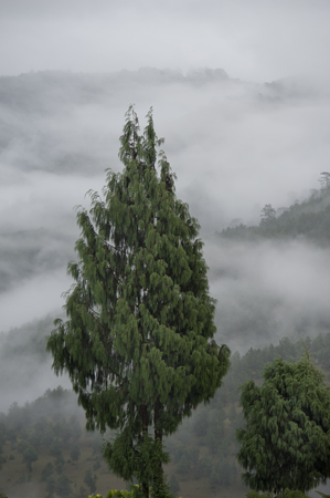 High angle view of trees in foggy valley, Punakha Valley, Punakha District, Bhutan Banco de Imagens - 97808614