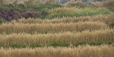 Rice paddies in a valley, Punakha Valley, Punakha District, Bhutan