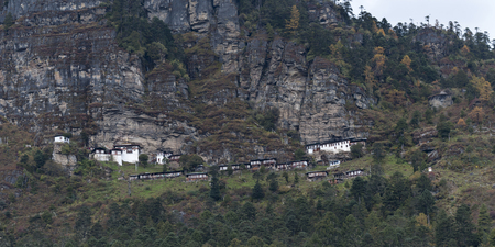 Trees in a forest, Bhutan Banco de Imagens