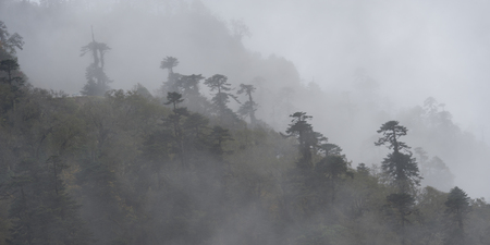 Fog covered trees in a forest, Trongsa District, Bhutan Banco de Imagens - 97738229