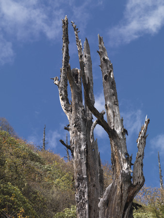 Low angle view of a bare tree, Bhutan