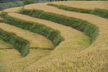 Terraced field, Punakha Valley, Punakha District, Bhutan Banco de Imagens