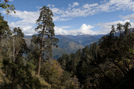 High angle view of trees on mountains, Rukubji Village, Trongsa District, Bhutan