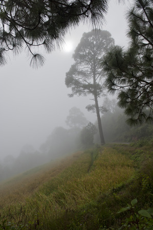 Fog covered trees in a forest, Punakha Valley, Punakha District, Bhutan Banco de Imagens
