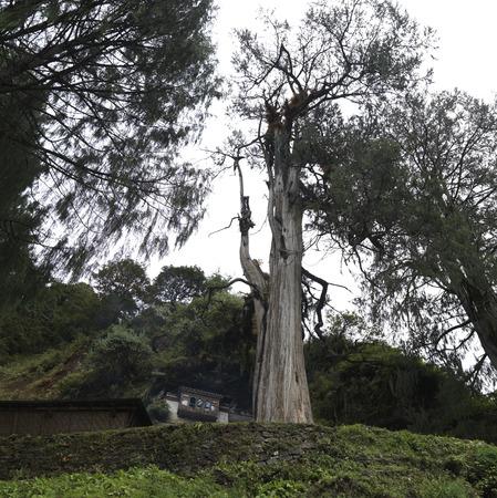 Trees in a forest, Tango Goemba, Thimphu, Bhutan