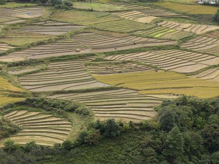 High angle view of a terraced field, Thimphu, Bhutan