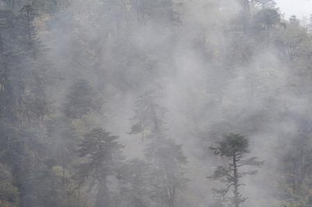 Fog over a forest, Trongsa District, Bhutan Banco de Imagens