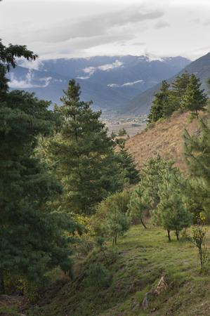 Trees in a valley, Como Resort, Uma Paro, Paro District, Bhutan Imagens