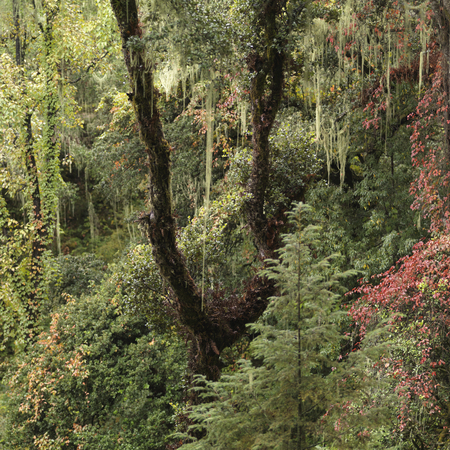 Forest, Taktsang Monastery, Paro Valley, Paro District, Bhutan Banco de Imagens