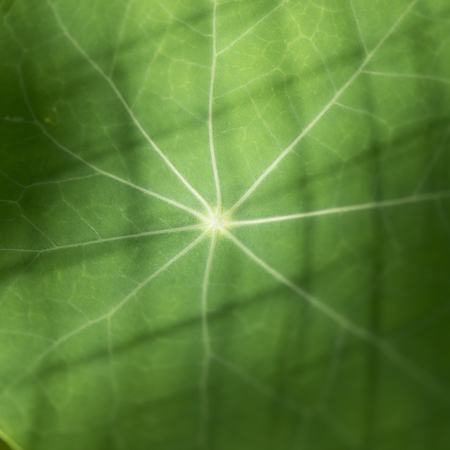 Close-up of full frame shot of the veins of a green leaf, Lake Of The Woods, Ontario, Canada