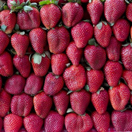 Rows of Strawberries for sale at market stall, Arcos de San Miguel, San Miguel de Allende, Guanajuato, Mexico