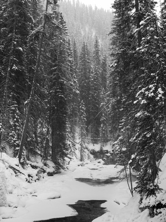 Stream flowing in snowy forest, Johnston Canyon, Banff National Park, Alberta, Canada