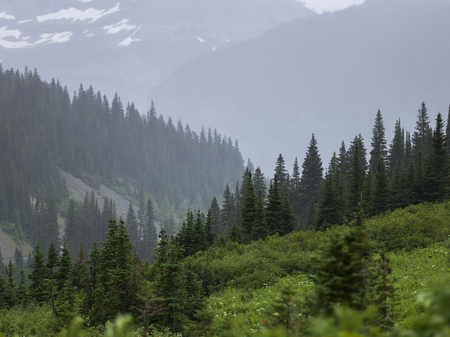 Scenic view of trees on mountain, Going-to-the-Sun Road, Browning, Glacier National Park, Glacier County, Montana, USA