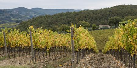 Scenic view of vineyard, Radda in Chianti, Tuscany, Italy
